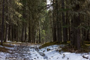 alder_trail_00 (1 of 1)