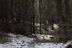 alder_trail_06 (1 of 1)