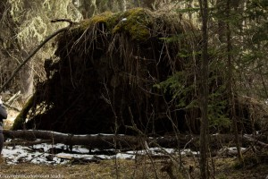 alder_trail_10 (1 of 1)