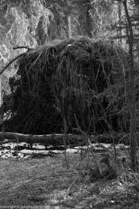 alder_trail_11 (1 of 1)
