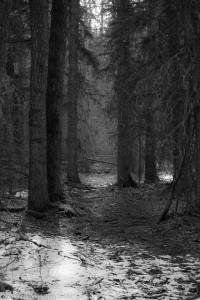 alder_trail_13 (1 of 1)