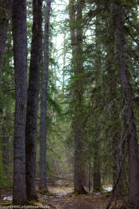 alder_trail_14 (1 of 1)