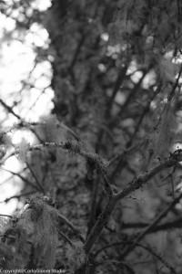 alder_trail_17 (1 of 1)