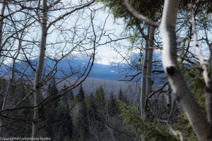 alder_trail_24 (1 of 1)