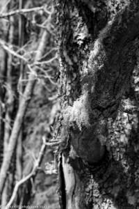 alder_trail_28 (1 of 1)
