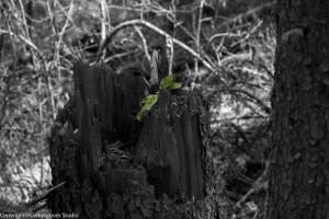 alder_trail_37 (1 of 1)